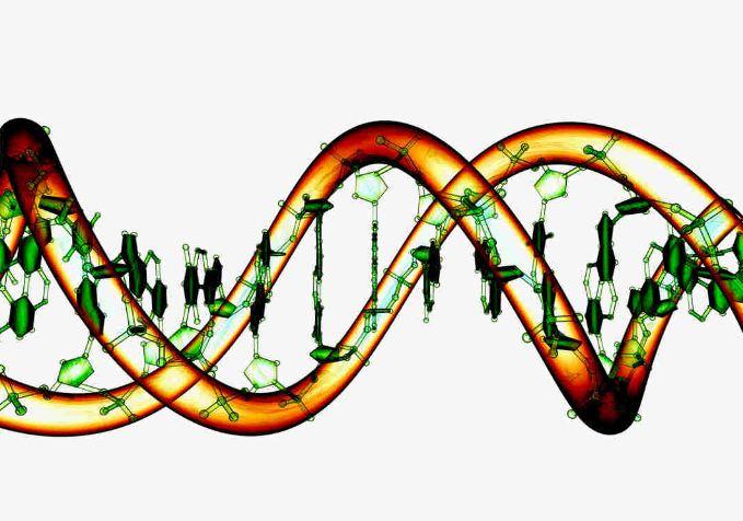 DNA molecule, responsible for heredity