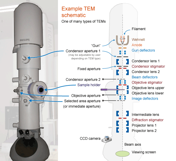 SCHEMATIC DIAGRAM OF Transmission Electron Microscope