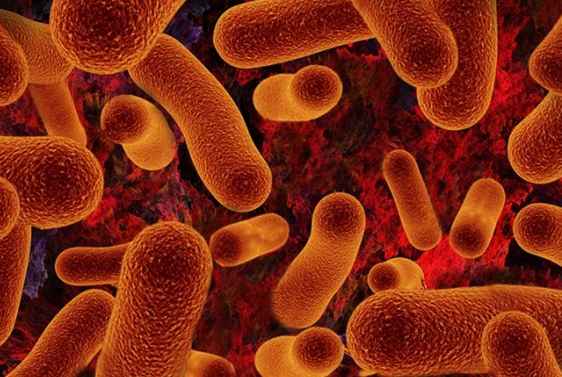 bacterial cells, a best example of microorganism