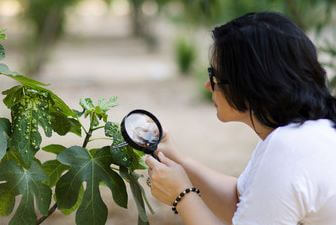 A young botanist examining leaf morphology