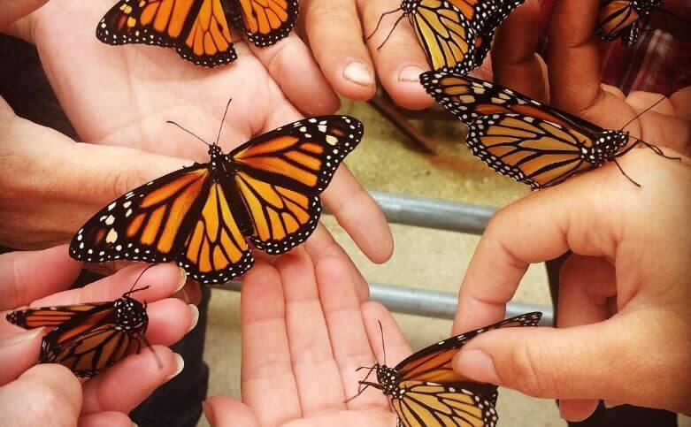 school kids caught monarch butterfly on their Wild day