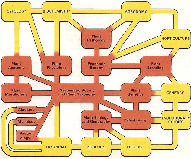 Branches of Botany