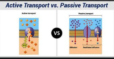 Difference Between Active and passive cell transport
