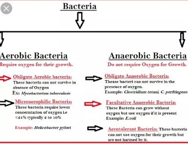 Difference Between Aerobic And Anaerobic Bacteria