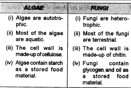 Difference Between Algae And Fungi