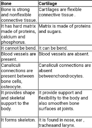 Difference Between Bone And Cartilage Read Biology