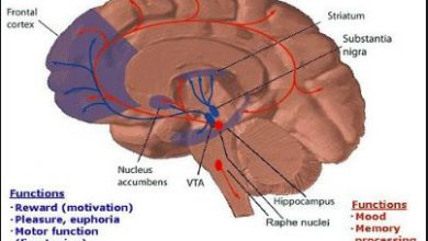Difference Between Dopamine and Serotonin