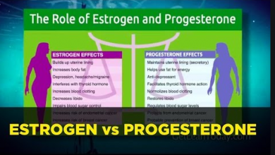 Difference Between Estrogen And Progesterone