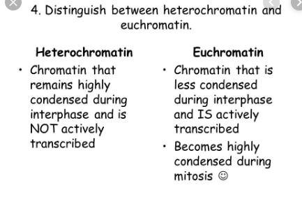 Difference Between Euchromatin And Heterochromatin