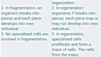 Difference Between Fragmentation and Regeneration