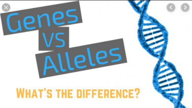 Difference Between Gen and allele