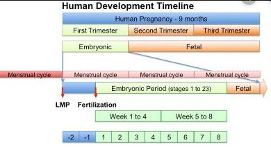 Difference Between Gestational Age and Fetal Age