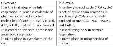 Difference Between Glycolysis and Krebs Cycle