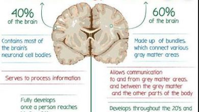 Difference Between Gray and White Matter