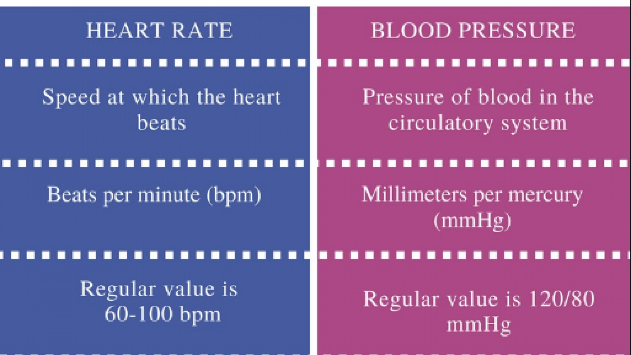 Difference Between Heart Rate And Pulse Rate | Read Biology