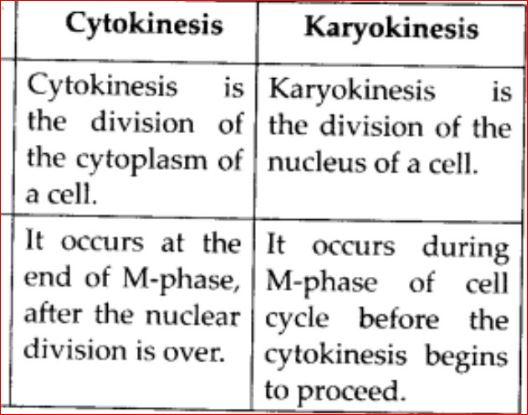 Difference Between Karyokinesis And Cytokinesis
