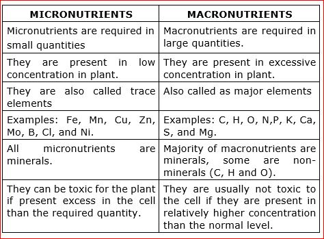 Difference Between Micronutrients And Macronutrients