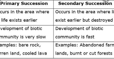 Difference Between Primary And Secondary Succession