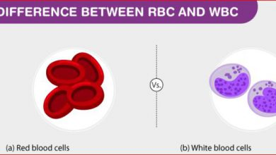 Difference Between Rbc And Wbc