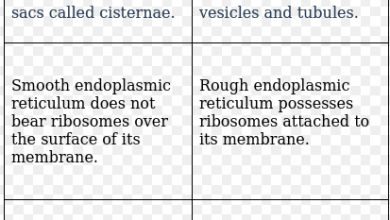 Difference Between Smooth and Rough Endoplasmic Reticulum