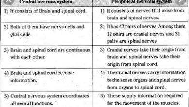 Difference between central and peripheral nervous system