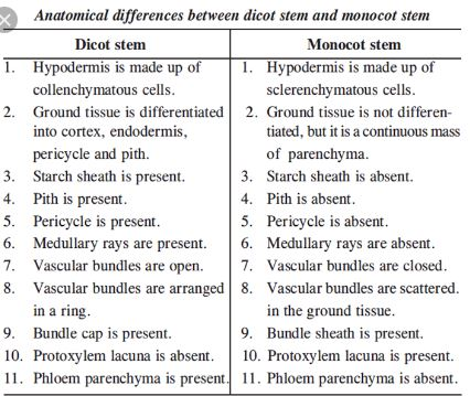 Differences Between Monocot And Dicot Stem