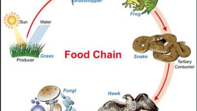 Food Chain Definition