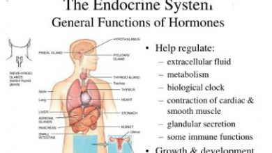 Functions Endocrine System