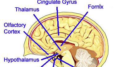 Parts of Limbic System