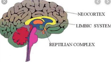 Parts of Reptilian Brain