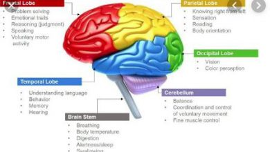 Parts of the brain and their functions