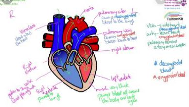 Structure and Functions of Heart