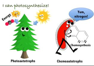 What are autotrophs