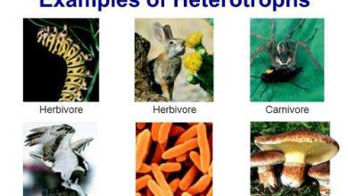 Examples of Heterotrophs