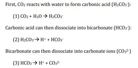 reaction of carbon dioxide in sea