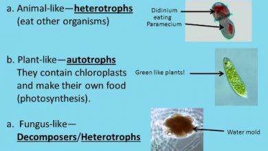 Different types of protists