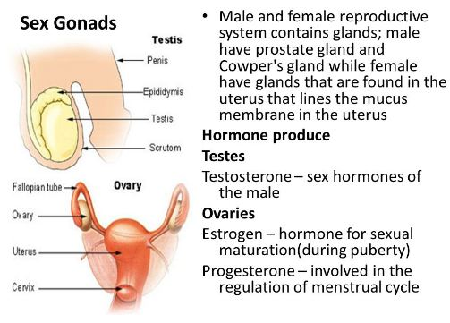 Male and female reproductive glands with their hormones