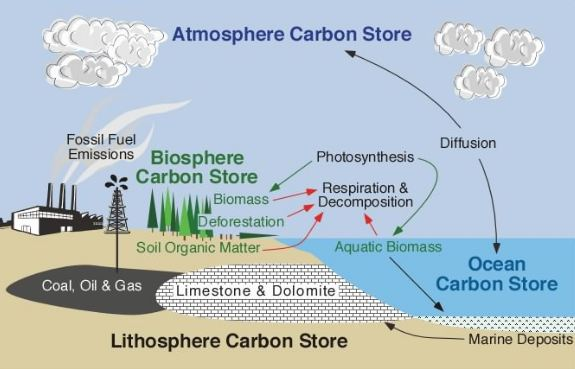 overview of carbon cycle