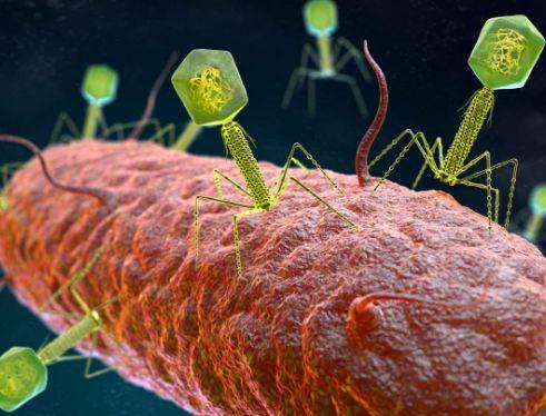 Bacteriophage a model good virus