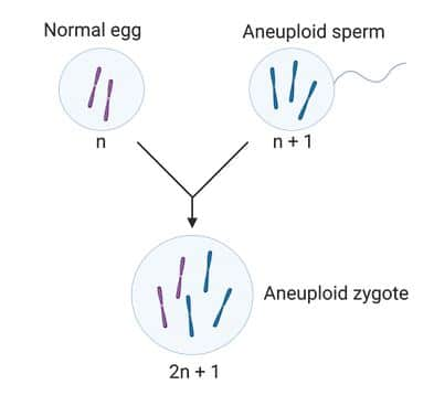 Aneuploidy in mitosis