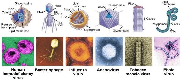 types of viruses