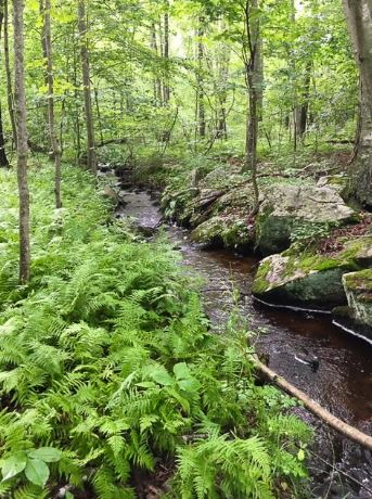 Notes on Importance of Afforestation: Watershed forests that surround the streams and reservoirs