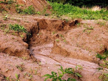 Notes on Importance of afforestation, afforestation controls erosion