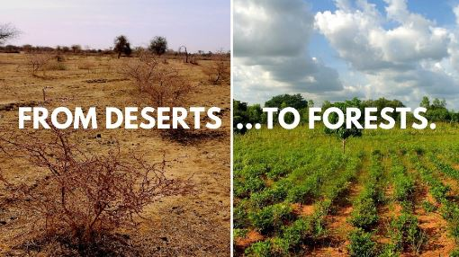 Notes on Importance of Afforestation, Conversion of land From deserts to forests