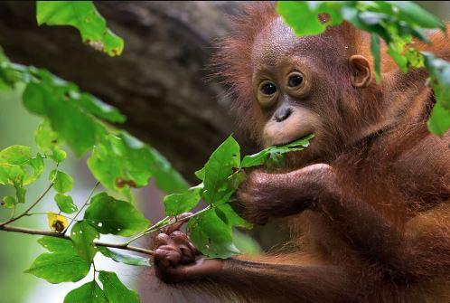 Notes on Importance of Afforestation: wildlife conservation