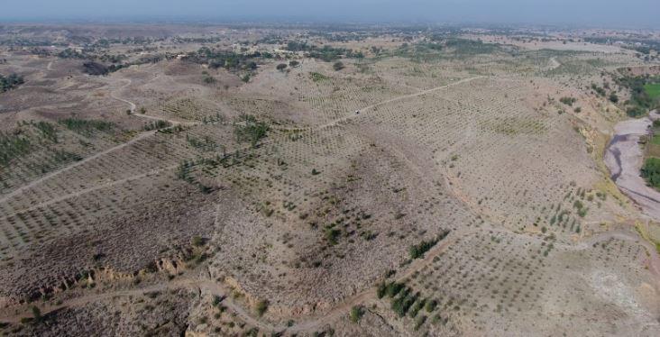 barren land before afforestation project