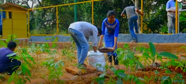 Afforestation by sowing plants