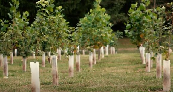 What is afforestation