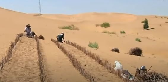 Afforestation by sowing cuttings in deserts. What is afforestation
