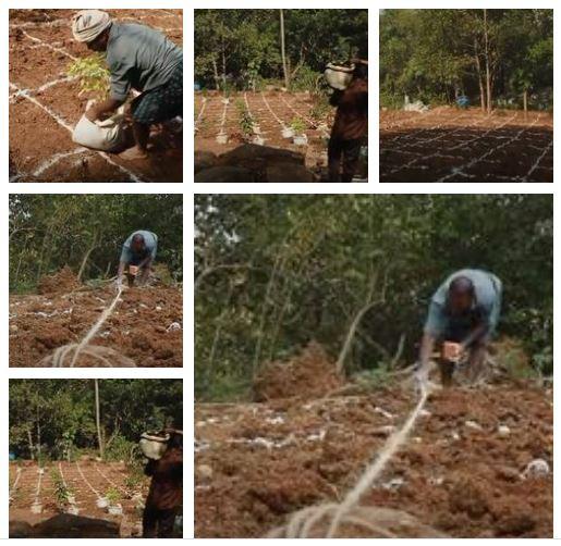 Land preparation for afforestation